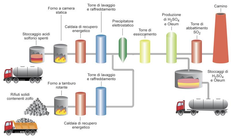 Starfish Regeneration Diagram Example Electrical Wiring Diagram